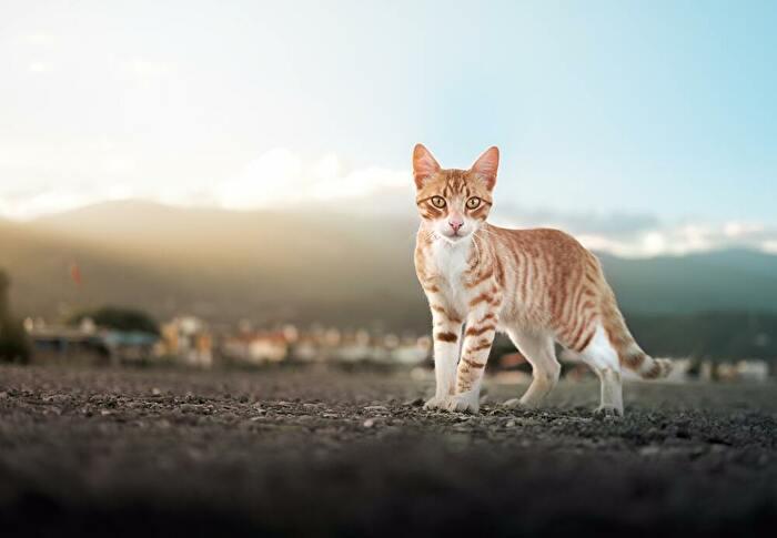 猫と水平線