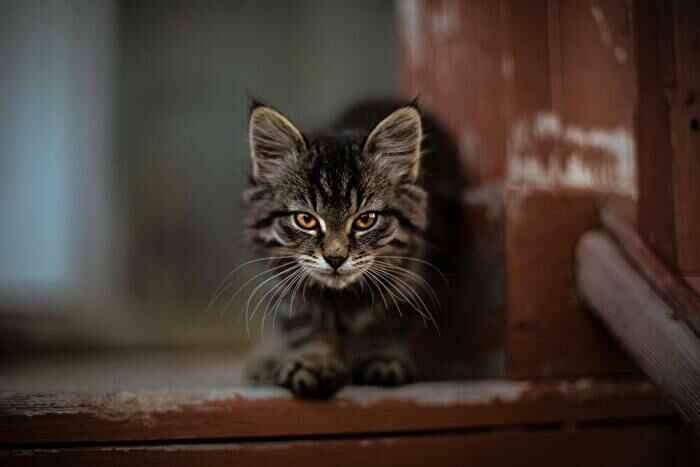 仕返しする猫