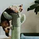 猫サムネイル