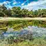 池サムネイル