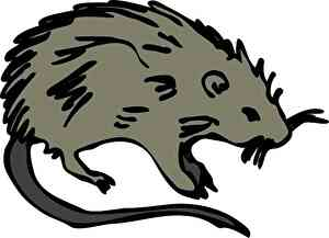 ratのイメージ