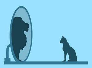 鏡を見る猫。