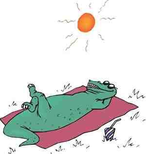 日光浴するワニ
