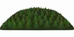 木がたくさん生えている森、山