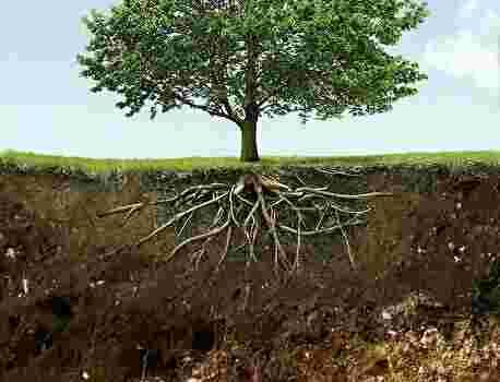 木が生えている土壌