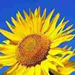 sunny サムネイル