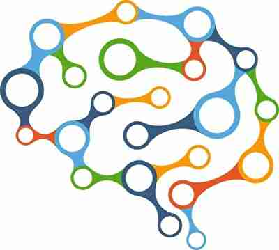 人間の脳神経