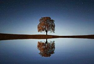 湖に映る木